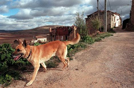 Perros de campo, perros de ciudad.