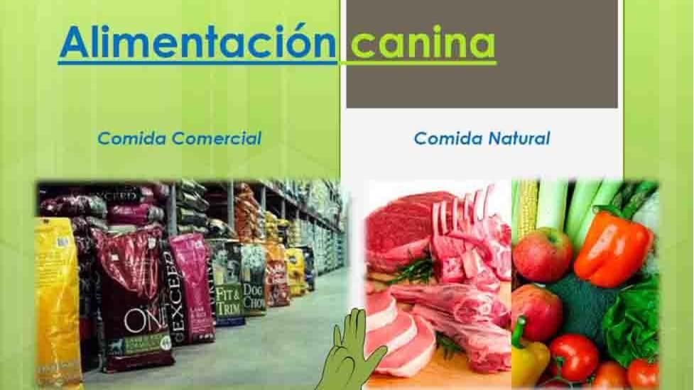 Alimentación natural contra piensos comerciales de gran renombre y poca calidad
